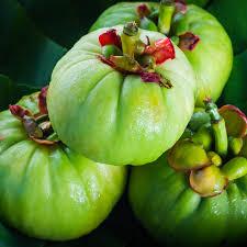 Garcinia Cambogia - ดี ไหม - รีวิว - pantip